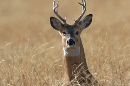 CDC disclose report the people can get  tuberculosis  from deer