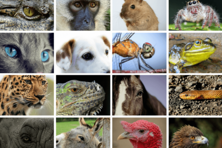 Views of Animals Eyes through