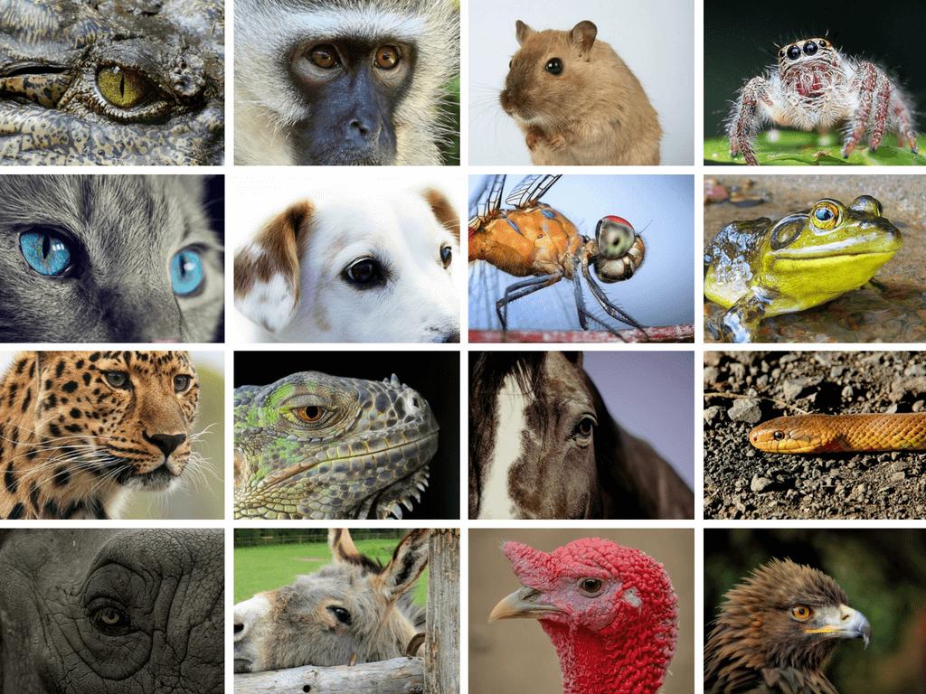 Views of Animals Eyes through