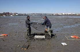 Reused oyster shell project targets sea fermentation along Maine coast