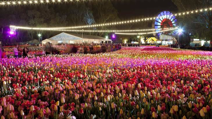 Canberra's flower show Floriade cancelled as ACT cases increase